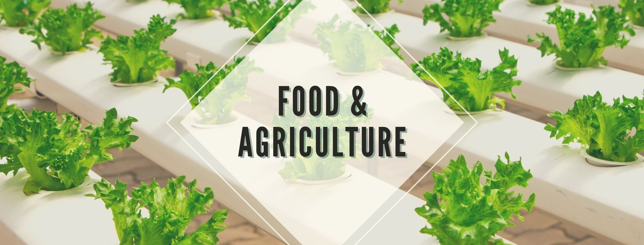 Link to Food and Agriculture page